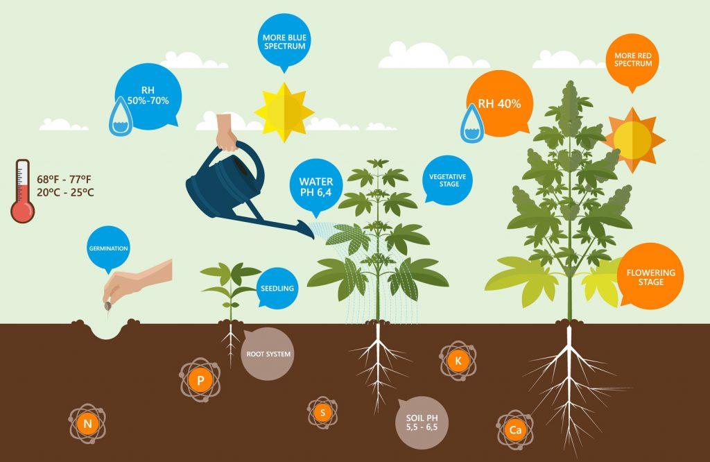 Voeding voor wietplanten
