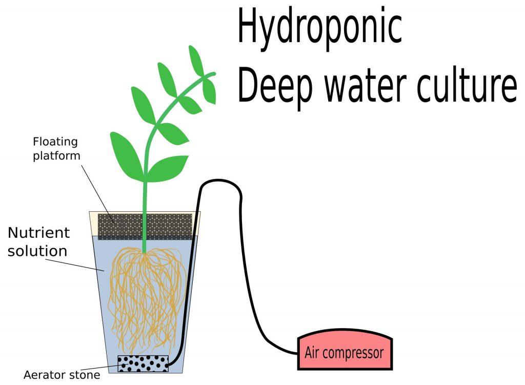 Deep water cultuur hydrologisch
